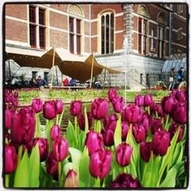 Tulip time in #amsterdam regram @nelsbells2013