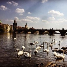 Stunning Charles bridge! #Prague #czechrepublic regram @ailurophobicbum #expatexplore #europejewel